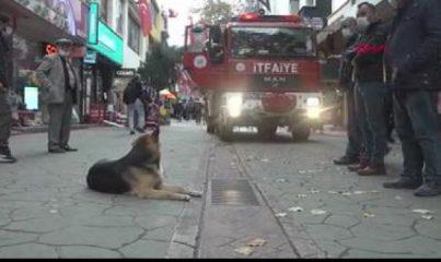 Köpeğin izlediği mazgallar, itfaiye ekipleri tarafından kameralarla incelendi