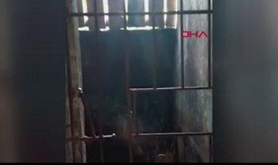 Filipinler'de insanlık dramı: 5 yıldır kafese kapatıldı
