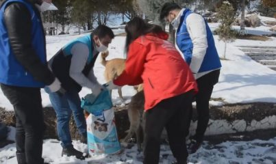 MALATYA - Gönüllü gençler sokağa çıkma kısıtlamasında sokak hayvanlarını unutmadı