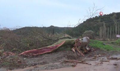 Manisa'da fırtına 430 yıllık çınar ağacına zarar verdi