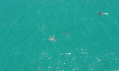 İstanbul'da yunus balığı sürüsü görsel şölen oluşturdu