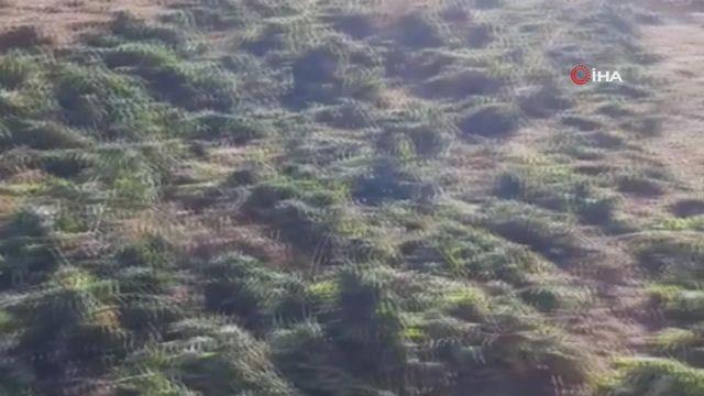 Bingöl'de 337 kilo uyuşturucu maddesi ele geçirildi