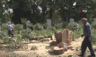 Edirnekapı Şehitliği'nde İBB'nin kestiği ağaçlar mezarlığın üzerine devrildi