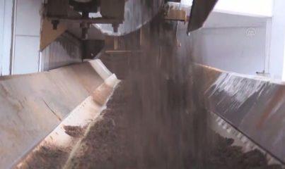 RİZE - ÇAYKUR 776 bin ton yaş çay alımı gerçekleştirdi